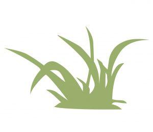 Pflanzen_0008 gras-Wandtattoo-Fensterbild-Wandbild-Wandaufkleber